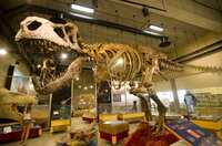 """T.Rex """"Scotty"""" wird Wahrzeichen Saskatchewans"""