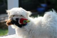 Gerettete Hunde  im Glück