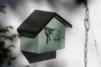 Nistkastenuhr für Vögel