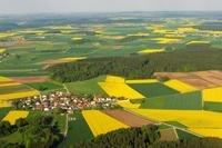 Rapsverarbeitung in Bayern - aus der Region, für die Region