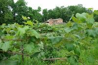 Great River Road Illinois: Paradies für Weinliebhaber