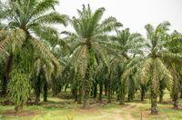 Oekom Research bewertet Nachhaltigkeitsziele