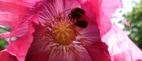 Eine Blume hat mir erzählt - Begegnung mit der Pflanzenwelt