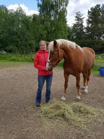 Sie heißt Steffi! Ein neues Finnpferd für das Hotel und SPA-Resort Freund