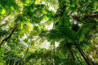 Nachhaltiges Palmöl zum Schutz der Regenwälder