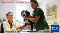 Arthrose beim Hund mit Stammzellen behandeln: Neue Therapie in Aachen