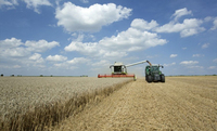 AGRAVIS-Experte zu den Vermarktungschancen für deutsches Getreide