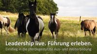Leadership live - Führung erleben! Führungsseminar mit Pferden.
