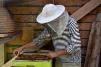 Reservat für fitte Bienen: Texel beheimatet besonders gesunde Ur-Völker