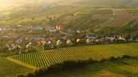 Tschechien feiert seine Weine