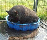 Bund Deutscher Tierfreunde gibt Tipps für Haustiere bei Hitze