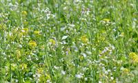 AGRAVIS-Experte: Greening-Zwischenfrucht jetzt in die Erde bringen