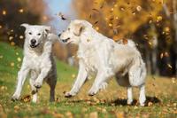 Herbstbeginn mit Hund 2016: Schnell noch mal weg auf vier Pfoten