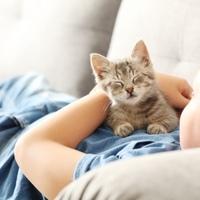 Katzennamen im Wandel der Zeit