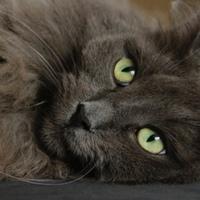 Die beliebtesten Katzennamen für jede Katzenrasse