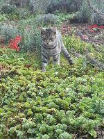 Welttierschutztag: Bundesweite Kastrationspflicht für Katzen