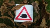 Kostenlose Warnschilder zum Schutz der Igel