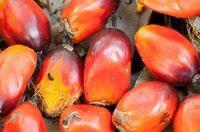 Öko-soziale Kriterien für Palmöl forcieren