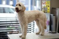 "Neuer Salon ""Fellnasen Stylist"" macht Hundefell fit für den Winter"