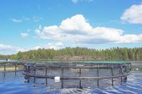 Aquakultur: Klares Wasser dank Kork