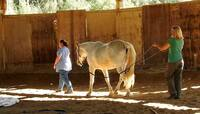 HorseDream Zertifizierung zum Pferdecoach