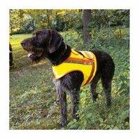 Reflektorenhalsbänder für Hunde wichtiger als Glitzersteinchen