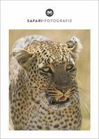 Die perfekte Fotosafari: Tipps von einem Wildtierfotografen