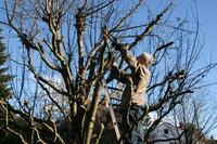 """""""Obstbaumschnitt im Winter: Achtung Unfallgefahr!"""" – Expertengespräch der ERGO Versicherung"""