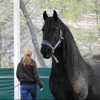 Führungskräfte- und Team-Coaching mit Pferden.