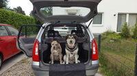 Hundehaare im Auto - Pflegetipps für einen sauberen Innenraum