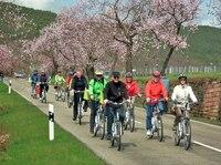E-Bike-Ausflüge zur rosa   Mandelblüte in  der Pfalz