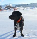 Winterliche Urlaubsextras für Hunde im Rivus, Salzburger Land
