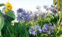 Aufgeblüht: Wanderreisen zu den schönsten Gärten