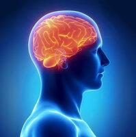 showimage Neuer Newsletter-Dienst www.GEHIRN-TIPPS.de für Neuro-Interessierte