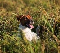 Lachsöl - Essentielle Fettsäuren sind auch für Hunde wichtig.