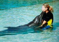 Mövenpick stoppt Freizeitangebot in Dubai-Delfinarium nach Tierschützerhinweisen