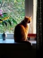 Gerede über Katzensteuer ist überflüssig