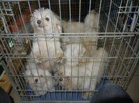 Hunde-Züchterinnen aus Schermbeck wegen Tierquälerei verurteilt