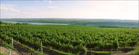 Kleines großes Weinland