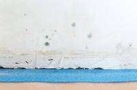 Wie gefährlich ist Schimmelpilz im Wohnraum nun wirklich?