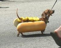 Auch an den närrischen Tagen Rücksicht auf Hunde nehmen