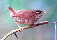 Vogelsprache - ein faszinierendes Kommunikationssystem