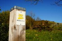 Moselsteig - Der Mosel Erlebnis Steig