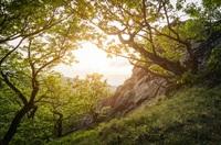 Fünf Tipps gegen Frühjahrsmüdigkeit