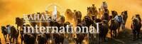 Internationale Experten des pferdegestützten Managementtrainings treffen sich in Ungarn