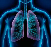 COPD: Entzündungen in kleinen Atemwegen bekämpfen