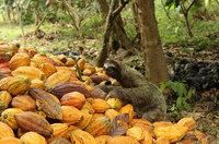 ForestFinance veröffentlicht erneut Biodiversitätsfortschrittsbericht