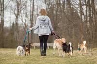 Leinentausch.de: Online Hundesitter in Deiner Nähe finden