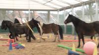 Ausbildung für das pferdegestützte Coaching