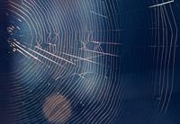Ende der Störerhaftung in lokalen Netzwerken (Wireless Local Area Network - WLAN)